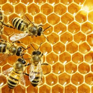 Beezneez Honeys